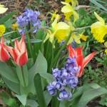 Spring at Bushy